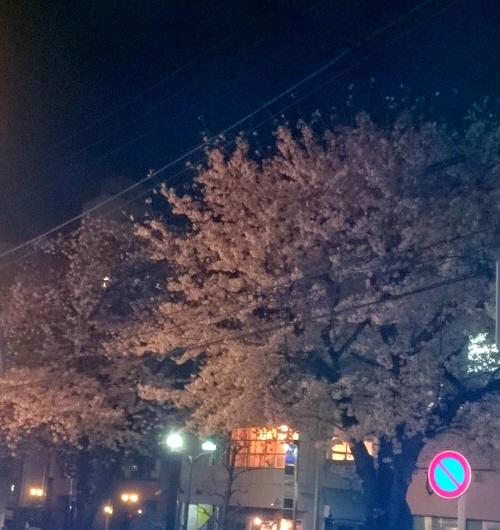 2017_Jiyu-Gaoka_Sakura.JPG