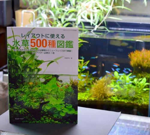 MizuKusa500_201901.JPG