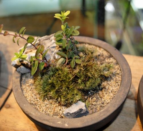 bonsai_1.jpg