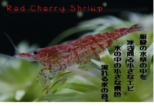 redcherry01.jpg